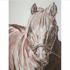 Van Nystelrooy (sanguine and sepia pastel on paper) #horse #horseart #horseartist #equine #equineart #equineartist #thoroughbred #horseracing #turf #stallion #pferd #pencildrawing #artoftheday #dailyart #artists_community #draw #drawing #drawings #arte #art #artwork #hobby #sketch