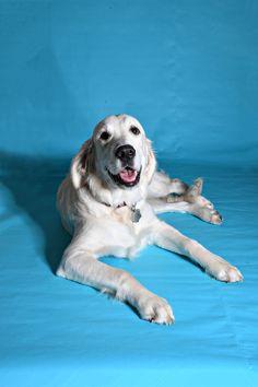 Portfolio Design, Graphic Design, Pets, Photography, Animals, Portfolio Design Layouts, Photograph, Animales, Animaux