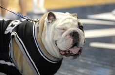 """Oh my gosh, he's winking! // Link goes to Buzzfeed """"30 Ridiculously Cute Pictures Of Butler Blue II"""""""