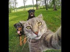 tatlı hayvanlar ile ilgili görsel sonucu