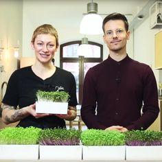 Microgreens gehören zu den ältesten Lebensmitteln der Menschen. Mit Heimgart können Sie Keimlinge jetzt einfach selber zu Hause züchten. Erfahren Sie mehr!