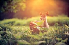 in the undergrowth (by andrew evans.) Ethereal Photography, Wildlife Photography, Animal Photography, Dog Proof Trash Can, Bear Puppy, Penguins And Polar Bears, Oh Deer, Baby Deer, Beautiful World