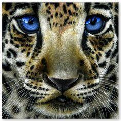 Pretty blue eyes!