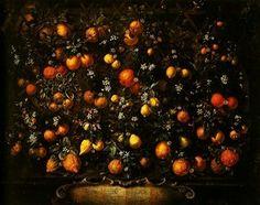 Citrus Fruits, painting by Bartolomeo Bimbi  oil on canvas  Uffizi Gallery  DateEarly 1700sSource. Author  Bartolomeo Bimbi(1648–1730)