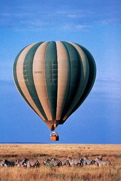 Photo Caption: Float above the Serengeti in Tanzania. Serengeti National Park, Tanzania What You'll See: African safari meets balloon adventure in Serengeti National Park. When To Go: The moderate climate is suitable for year-round ballooning, though t Balloon Rides, Hot Air Balloon, Air Ballon, We Are The World, Wonders Of The World, Parc National, National Parks, Monte Kilimanjaro, Safari Photo