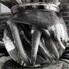 Lee Friedlander - Stems Lee Friedlander, Stems, Ps, Studio, Photography, Drift Wood, Trunks, Photograph, Fotografie