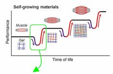 This material can adapt to stretch and pressure, and repair itself, similar to human muscles Physics World, Science And Technology News, Muscles, It Works, Stress, Muscle, Psychological Stress