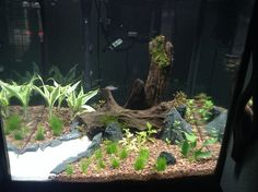 Step-by-Step Guide for Setting Up a Planted Tank   RateMyFishTank.com