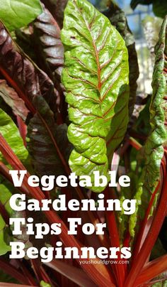 Vegetable gardening tips for beginners - 17 top tips for growing your own food at home. Organic gardening advice from a farmer. #gardeningtips #vegetablegardening #organicgardening #organicgardeningtips