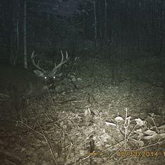 Spypoint camera ,  beautifull  big buck ,  next years your mine