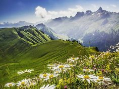 Berge, die aussehen wie mit einem grünen Teppich aus Samt überzogen. Im Hintergrund die Felsspitze des Chaiserstocks. Kein Wunder, dass die Blumen in dieser herrlichen Umgebung um die Wette blühen, oder? Alps, Switzerland, To Go, Hiking, Mountains, Places, Inspiration, Travel, Sheep