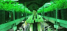 John Mayer Has Fully Embraced the Weed Life - http://weedonsteroids.com/john-mayer-has-fully-embraced-the-weed-life/