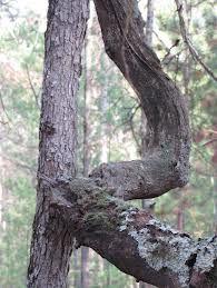 Tree R