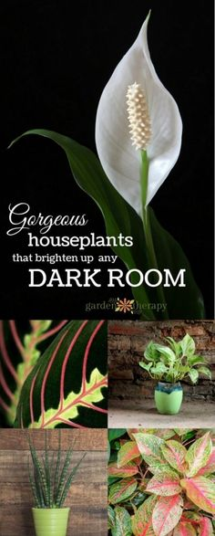 Gorgeous Houseplants that Brighten Up any Dark Room. These pretty plants thrive in low-light environments. Organic Gardening, Gardening Tips, Indoor Gardening, Balcony Gardening, Gardening Books, Gardening Gloves, Urban Gardening, Hydroponic Gardening, Urban Farming