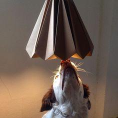 Lanna!! #iluminoo #dog #bétula #handmade #lannadog #luminarias de papel #ilovepaper #ilovedog