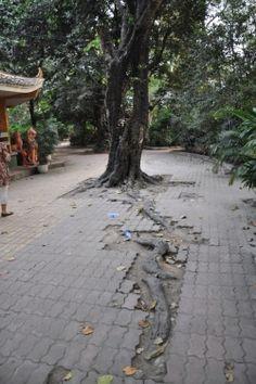 Arbre dans le parc Botanique de Saïgon