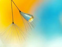 Light drop by miss_gecko. @go4fotos
