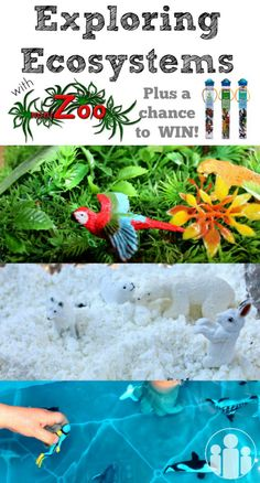 Exploring Ecosystems | Racheous - Lovable Learning  + WIN with MiniZoo!