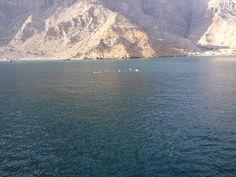Delfini Oman