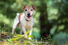 Emory | Adoptable Jack Russell Terrier | Georgia Jack Russell Rescue, Adoption & Sanctuary #NoelitoFlow . Repin & Like and follow here http://www.twitter.com/noelitoflow http://www.facebook.com/thisisflow http://www.instagram.com/rockstarking