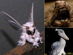 YUUUCKY!!!!-12 Of The Scariest-Looking Animals On Earth 12 Of The Scariest-Looking Animals In The World – The Frisky