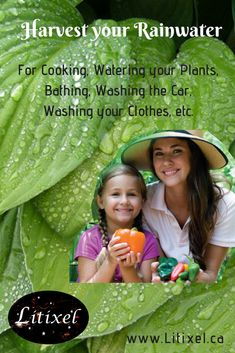 Rainwater Harvesting for your health and your pocket book