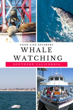 If you are visiting Southern California, don't miss the opportunity to go whale watching! #travel #guide #activities #thingstodo #newportbeach #socal #california #southern #coast #whale #watching #tour #bucketlist #familyfriendly #kids #familytravel #vacation #planning #goodlifexplorers #unitedstates #tips #northamerica