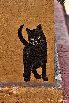 Miami Street Cat anim, miami street, arizona street, graffiti, black cats, cat street art, street cat, art black, streetart