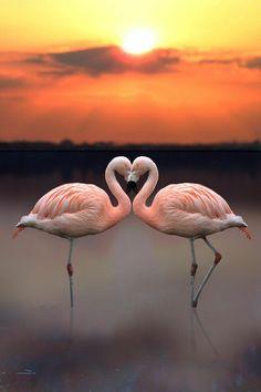 Much Love heart to heart Love
