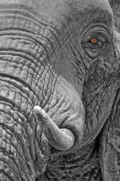 Eye of the Ele by Marc MOL on 500px