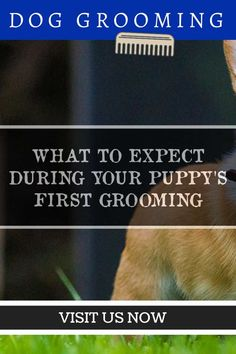 Dog Grooming Tips for Home Care *** More info could be found at the image url. Dog Grooming Tips, Dog Grooming Supplies, Dog Grooming Business, Bathing A Puppy, Loyal Friends, Dog Shampoo, New Puppy, First Love, Puppies