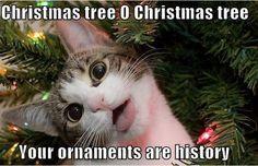 #cat #cats #kitten #kittens #pet #pets #photooftheday #catoftheday #cute #christmas