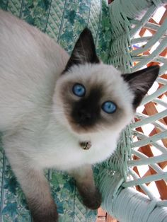 Sweet baby blue eyes