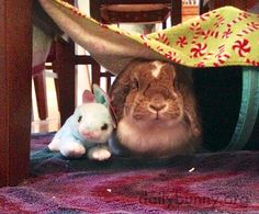 Bunny hangs out in her fort with a friend - March 16, 2017
