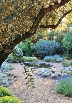 Jardin bajo un olivo. Varios tipos de Lavanda.... me hace pensar en los pueblos del sur de Italia.