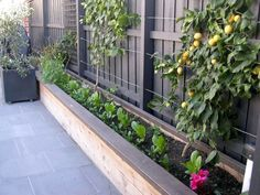 raised garden bed on a narrow side yard - good use of space for shade loving pla. - raised garden bed on a narrow side yard – good use of space for shade loving plants - Unique Gardens, Small Gardens, Beautiful Gardens, Outdoor Gardens, Side Gardens, Garden Beds, Home And Garden, Garden Planters, Tree Garden