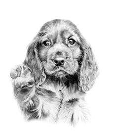 cocker_spaniel_puppy_- drawings - black and white Springer Spaniel Welpen, Springer Spaniel Puppies, Animal Sketches, Animal Drawings, Pencil Drawings, Puppy Drawings, Dog Sketches, Perro Cocker Spaniel, Dog Artwork