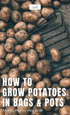 Think you don't have enough space to grow potatoes? Think again! Check out this easy guide on how to grow potatoes in bags. #growyourown #gardeningtips #growingfamily