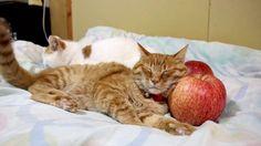 世界一りんご枕 171207