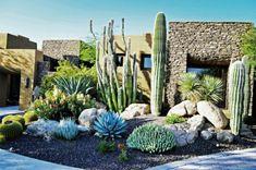 Cactus et plantes grasses extérieur pour un jardin facile
