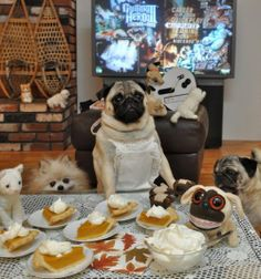 jenny the pug, w/ pies and friends and family.