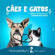Ad Design, Flyer Design, Pet Branding, Pets Online, Face Profile, Photoshop, Little Pets, Social Media Design, Digital Marketing