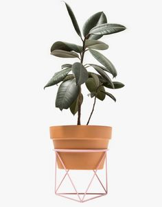 "From Eric Trine, an octahedron ring planter in Pink. Featuring a steel construction, powder coated finish, octahedron style wire base and ring planter for a standard 10"" terra cotta pot.  • Octahedron ring planter in Pink • Steel construction • Powder"