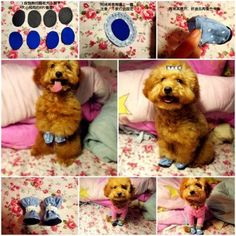 DIY Casual Dog Shoes 1