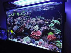 Summary: Everyone likes fish and this is the reason most of them are growing them at their home. Saltwater Fish Tanks, Saltwater Aquarium, Aquarium Design, Reef Aquarium, Salt And Water, Fresh Water, Reef Tanks, Marine Tank, Coral Tank