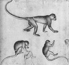 Scimmie (1430-1440 circa; Parigi, Louvre)