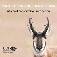 Take action to protect endangered wildlife.