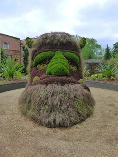 20-intricate-and-beautiful-topiary-sculptures-13