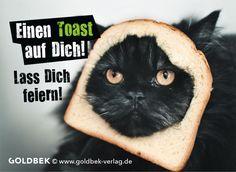 Die 184 Besten Bilder Von Katzen Geburtstag Cat Birthday Birthday