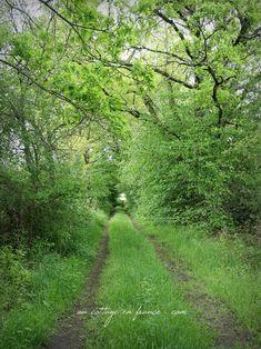 En descendant vers la rivière (Walking down to the river)